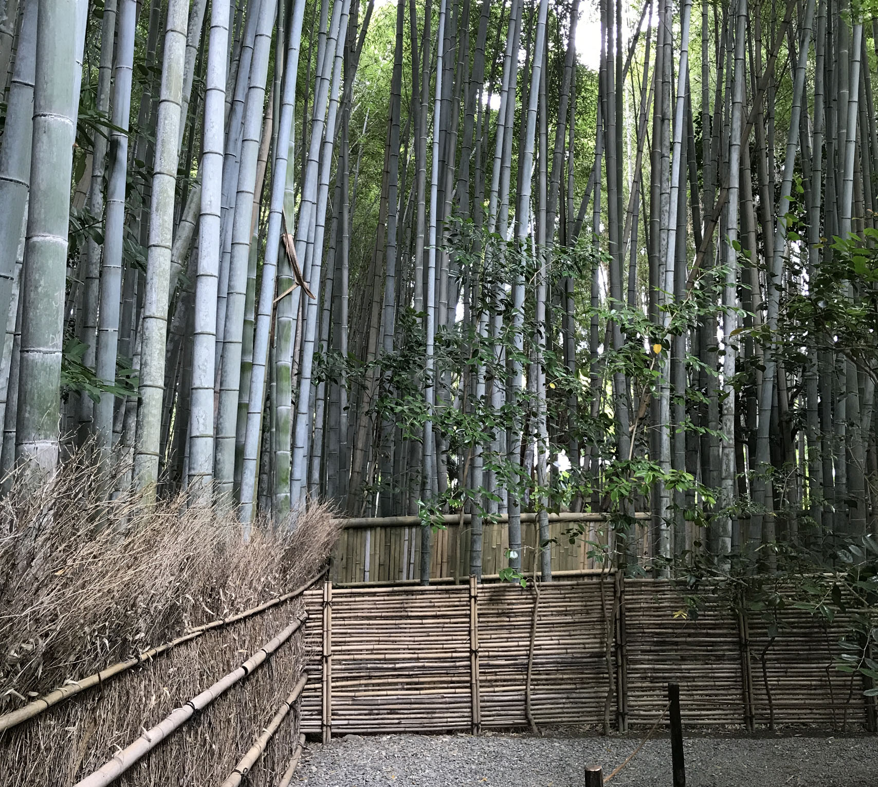 竹林に囲まれた参道